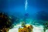 The Great Outdoors (RoamingTogether) Tags: diving florida floridakeys ikelite ikeliteds51 johnpennekamp keylargo molassesreef nikon nikon181053556 nikond300 pennekampstatepark reef scuba scubadiving watersports