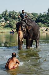 LAKSHMI THE TEMPLE ELEPHANT, Hampi / India 2016 (monoauge) Tags: d7000 dslr nikon nikond7000 lakshmi elephant elefant river bathing baden fluss indien india karnataka hampi southindia people travel travelpic travelphotography street streetshot streetphotography reportage indians