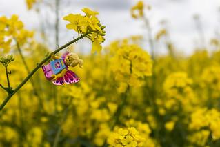 A butterfly in the field