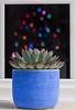 Flowers or Fruits? (jgaosb) Tags: lights reflection fruit window home