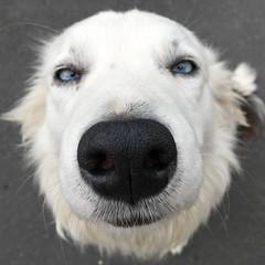 Harry (Ciaran C Reilly) Tags: border collie dog countygalway ireland