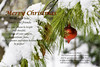 self-explanatory (TAC.Photography) Tags: christmas christmasgreetings winter snow ornaments redornaments pine pineneedles bibleverse bible verse scripture john316 love god gave son holiday tomclarkphotgraphycom tomclark tacphotography whitepine tomclarknet