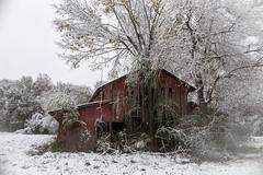 parting shot...snow of 2017 (Mr. Greenjeans) Tags: 2017 snow louisiana barn abandoned rural