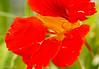 171227 165935 (friiskiwi) Tags: macroflowers