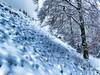 The gradient (Elenovela) Tags: schnee snow winter deutschland germany baum tree landschaft landscape wald forrest nationalpark nationalparksaarhunsrück saarland otzenhausen keltenwall celticwall panasonicgh4 panasonicgvario1445mmf3556 elenovela karstenmüller