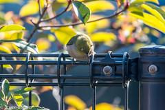 180104 Donosaka Park-03.jpg (Bruce Batten) Tags: shadows locations wild machida plants parks subjects honshu japan animals vertebrates birds tokyo donosaka machidashi tōkyōto jp