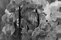 IMG_0322 (www.ilkkajukarainen.fi) Tags: talvi puutarha garden winter helsinki visit travel traveling happy life museumstuff finland finlande eu europa scandinavia flower kukka nature luonto