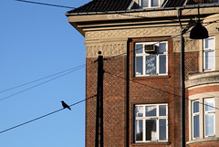 "... "" - No thanks "" ... (ChristianofDenmark) Tags: christianofdenmark copenhagen winter denmark sunshine windows crow beautyparlour beauty parlour"
