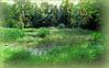Partie humide du jardin botanique expérimental Jean Massart, Auderghem, Bruxelles, Belgium (claude lina) Tags: claudelina belgium belgique belgïe bruxelles brussel auderghem jardin garden jardinbotanique jardinjeanmassart marais plandeau roseaux