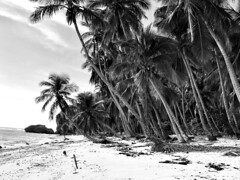 Remote Beach (Broad Sunlit Uplands) Tags: beautiful sand palms trees travel remote beach dominicana