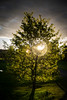 Light (Luz) (Dibus y Deabus) Tags: gijon asturias españa spain arbol tree amanecer dawn naturaleza nature canon 6d tamron