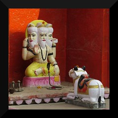 bundi 2017 (gerben more) Tags: shrine stepwell statue nandi religion hinduism hindugod colours colors cow god india rajasthan bundi