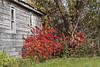 2017-10-22_10-42-08 Abandoned (canavart) Tags: abandoned church autumn princeedwardcounty ontario canada sumac wmchurch 1871