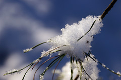 a touch of snow (scott1346) Tags: winter snow water crystaline fluffy white cold weather tree branch needle 1001nights 1001nightsmagiccity autofocus thegalaxy closeup