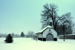 Country Christmas (Petrarch's Secret) Tags: winter snow landscape country christmas countrychristmas canada tree ontario rural outdoors