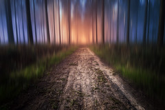 # au delà des rêves # (Thomas Vanderheyden) Tags: dream reve colors couleur forest foret nature chemin road paysage landscape posttraitement fujifilm thomasvanderheyden beautifulearth light lumiere