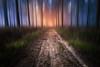 # au delà des rêves # (Thomas Vanderheyden) Tags: dream reve colors couleur forest foret nature chemin road paysage landscape posttraitement fujifilm thomasvanderheyden beautifulearth light lumiere