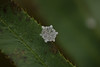 First Snowflake of Winter (EyeoftheImage) Tags: amazing beautiful bestshotoftheday breathtaking capturing capture country discovery depthoffield dof exploring earth exquisite explore forests forest globe greatphotographers greatnature landscape landscapes majestic macro newengland ngc nature picturesque powerful rural winter weather