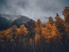 Whispers of the Trees (miss.interpretations) Tags: chilly cold trees whispers wind breeze rustle dancingleaves melancholy nostalgia memories thoughts remembrance fog mist mountains autumnends winter colorado rachelbrokawphotography coloradolandscapes moody thoughtful handedit canon6dmarkii 35mml