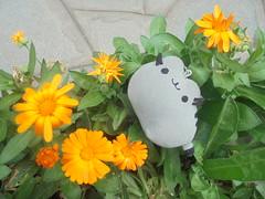 686 (en-ri) Tags: pusheenthecat fiori flowers cespuglio bsh sony sonysti grigio nero verde arancione gatta cat miao pupazzino