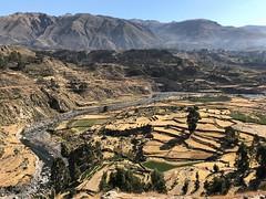 IMG_4457 (2) (massimo palmi) Tags: perù canyon colca condor colcacanyon cocariver arequipa colcavalley terrace terraces steppedterraces ande andeancondor