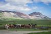 Islanda - DSC_2227 (Christian Taliani) Tags: 2016 avventure discovery islanda