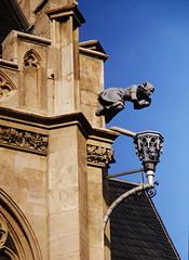 Erfurter Rathaus: Wasserspeier (fotonordhessen) Tags: erfurt rathaus wasserspeier gargoyle
