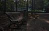 Sonsbeek (RobMenting) Tags: path arnhem netherlands tree gelderland park canon europe eos