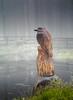 Kingfisher Carving (Man with Red Eyes) Tags: wood beaconfell forestofbowland statue bird sculpture kingfisher dewpond hasselblad h1 hc100mmf22 phaseone p45 captureone v11 mediumformat mfd preston northwest lancashire