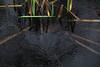 Raining  IMG_1154 (twoislandliving) Tags: weather rain raindrops pond hillsborough ireland