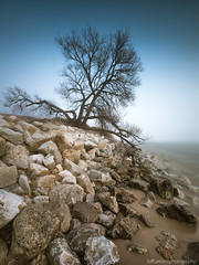 The Tree at Duck Lake Channel (golferboy2321) Tags: michigan tree muskegon longexposure leefilters