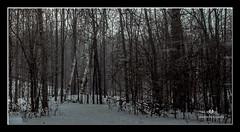 DECEMBER 2017  NGM_6935_3577-1-222 (Nick and Karen Munroe) Tags: blizzard snowfall snowstorm snowy winter wintertrees winterstorm wintry winterwonderland wintery cold ice trees tree canada beauty brampton beautiful blackandwhite bw blackwhite bandw nikon nickmunroe nickandkarenmunroe nature nickandkaren nick nikond750 d750 1424 1424f28 nikon1424f28 munroedesignsphotography munroedesigns munroephotography munroe landscape karenick23 karenick karenandnickmunroe karenmunroe karenandnick karen ontario outdoors ontariocanada
