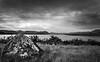 (Rob-Shanghai) Tags: mono nz newzealand lake tekapo rock leica m240 cv21mm