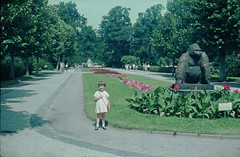Berliner Zoo 19.7.1965 (rieblinga) Tags: 1965 berlin zoo analog agfa ct18 diafilm gorilla