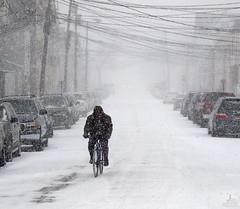 Determination (Jersey JJ) Tags: determination blizzard snow storm bicycle street cold transportation j2