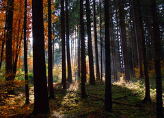 In the dark forest (anubishubi) Tags: forest wald autumn herbst nadelwald mischwald nikond60