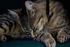 IMG_5841 (Lightcatcher66) Tags: katzencats florafauna makros lightcatcher66