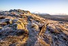 Loopy Kiri approaches! (allybeag) Tags: binsey december light frost ice kiri dog daft daftie running cairn rocks stones