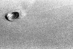 A shell - Cervia - June 2009 (cava961) Tags: shell sand beach analogue analogico monochrome monocromo bianconero bw