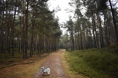 """""""Willem"""" on adventure (Lars Loomans) Tags: veluwe bos trees forest bomen hond dog nature"""