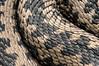 _0NA6142 (NorbertKaszycki) Tags: vipera berus zmija zygzakowata snake venomous viper
