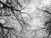 Winter Reflection (Rossdxvx) Tags: blackandwhite reflection tree trees noir naturenoir nature water dark darkwater abstract art silhouette 2017 woods winter