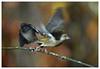 La fuite- The escape (isabelle.bienfait) Tags: fuite escape flou envol oiseaux bird blur unschärfe nature wildlife