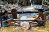 Sago palm starch - filing the tree trunk (10b travelling / Carsten ten Brink) Tags: 10btravelling 2017 asia asie asien carstentenbrink iptcbasic indonesia indonesian indonesie indonesien madabay malabay mentawai mentawaian mentaweier muarasiberut siberut sumatera sumatra sumatran ugai ugay westsumatera westsumatra archipelago carbohydrate ethnic ethnicminority group island islands palm sago starch tenbrink tribe