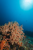 Sahoung I - 1 (Rhapsody-In-Blue) Tags: indonesia indonésie sulawesi célèbes manado gangga ganggaisland bangka bangkaisland underwater sea underwaterambiance wideangle grandangle paysage ambiance canon1740mm sealife marinelife sahoungi sahoung corals coral sponge sponges éponges éponge corail coraux