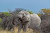 Etosha National Park, Namibia (Lassetjus photo) Tags: fantasticnature etosha big grey