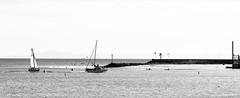 Heading to the Dock (thedailyjaw) Tags: d610 nikon 85mm streetphotography street santabarbara sb boats pelicans boating sail sailor sailing dock beach coastline coastal coast