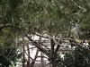 Aviario (MarisaTárraga) Tags: españa spain murcia terranatura zoo animal pajaro ave bird naturaleza nature arbol tree fujifilmsl300