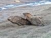 MID_0358 (mikedoylepics) Tags: seal seals greyseal donnanook lincolnshire lincolnshirewildlifetrust animals british britishwildlife d500 mammals nature nikon nikond500 wildlife wild