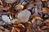 FULLES GELADES (Joan Biarnés) Tags: fullesgelades tardor otoño garrotxa santfeliudepallarols 238 panasonicfz1000 camìdesantuaridelasalut